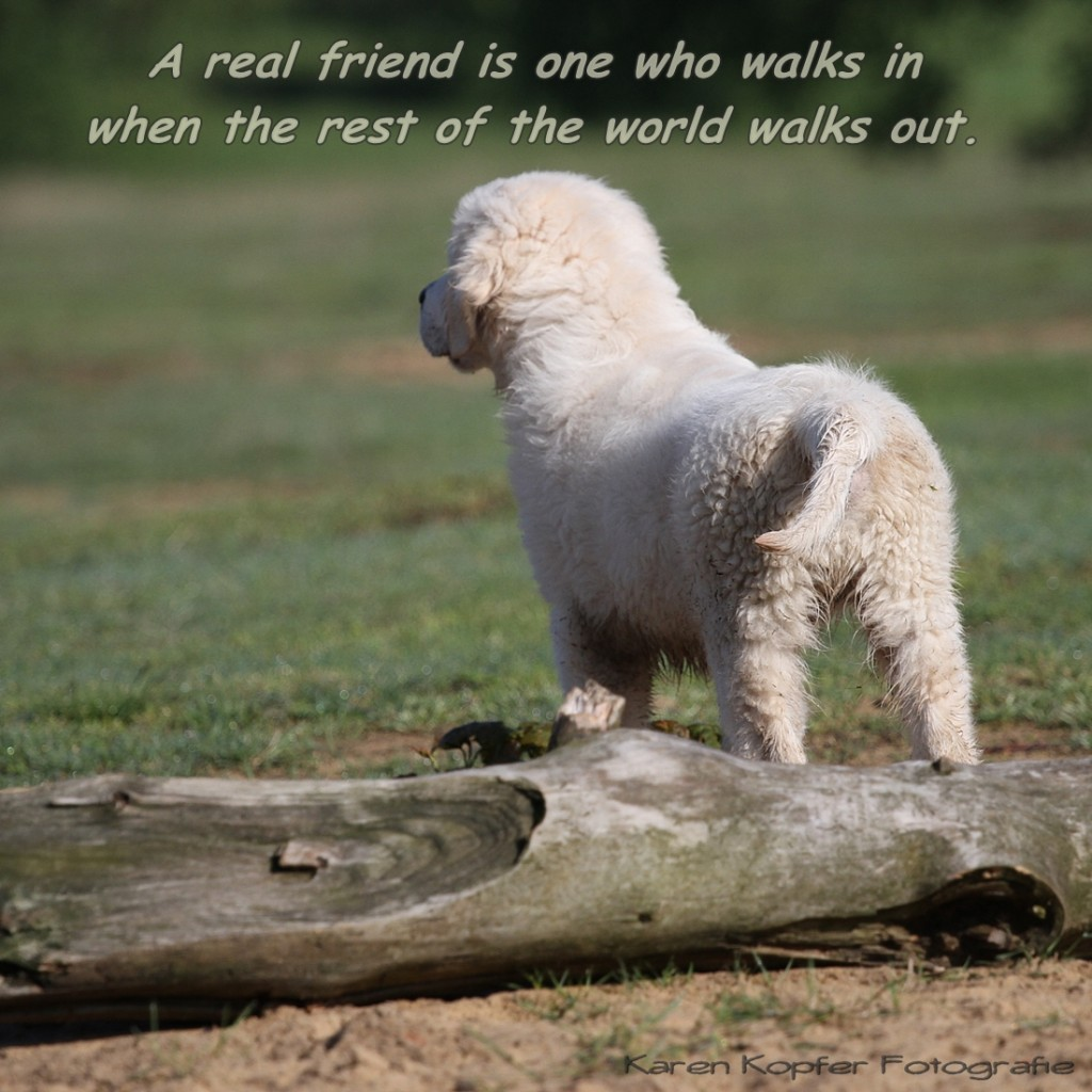 A true friend is the dog