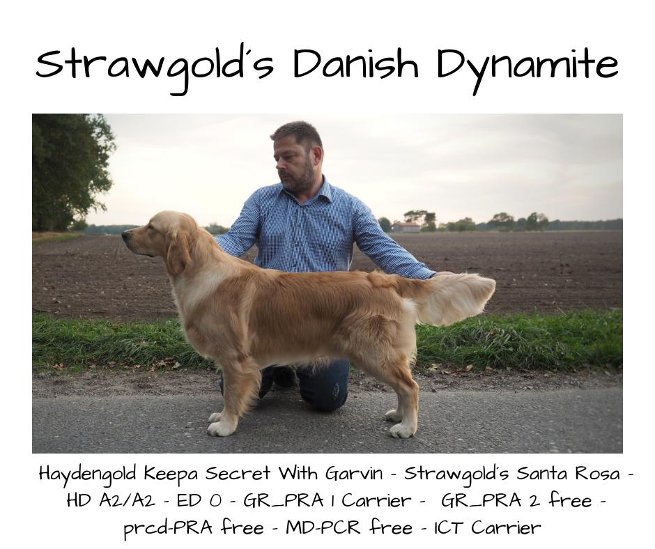 Strawgold´s Danish Dynamite