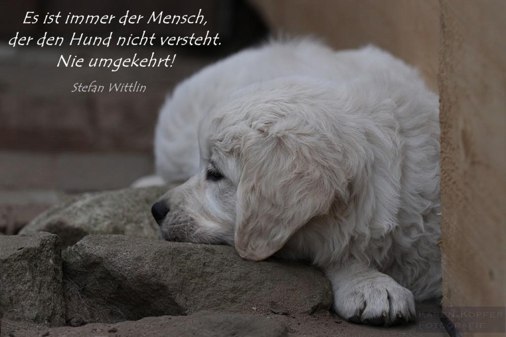 den Hund verstehen