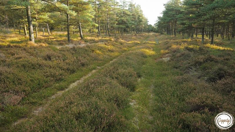 Fano Heide und Waldgebiet
