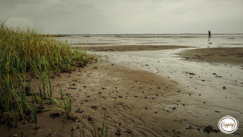Fanø Austern suchen im Wattenmeer