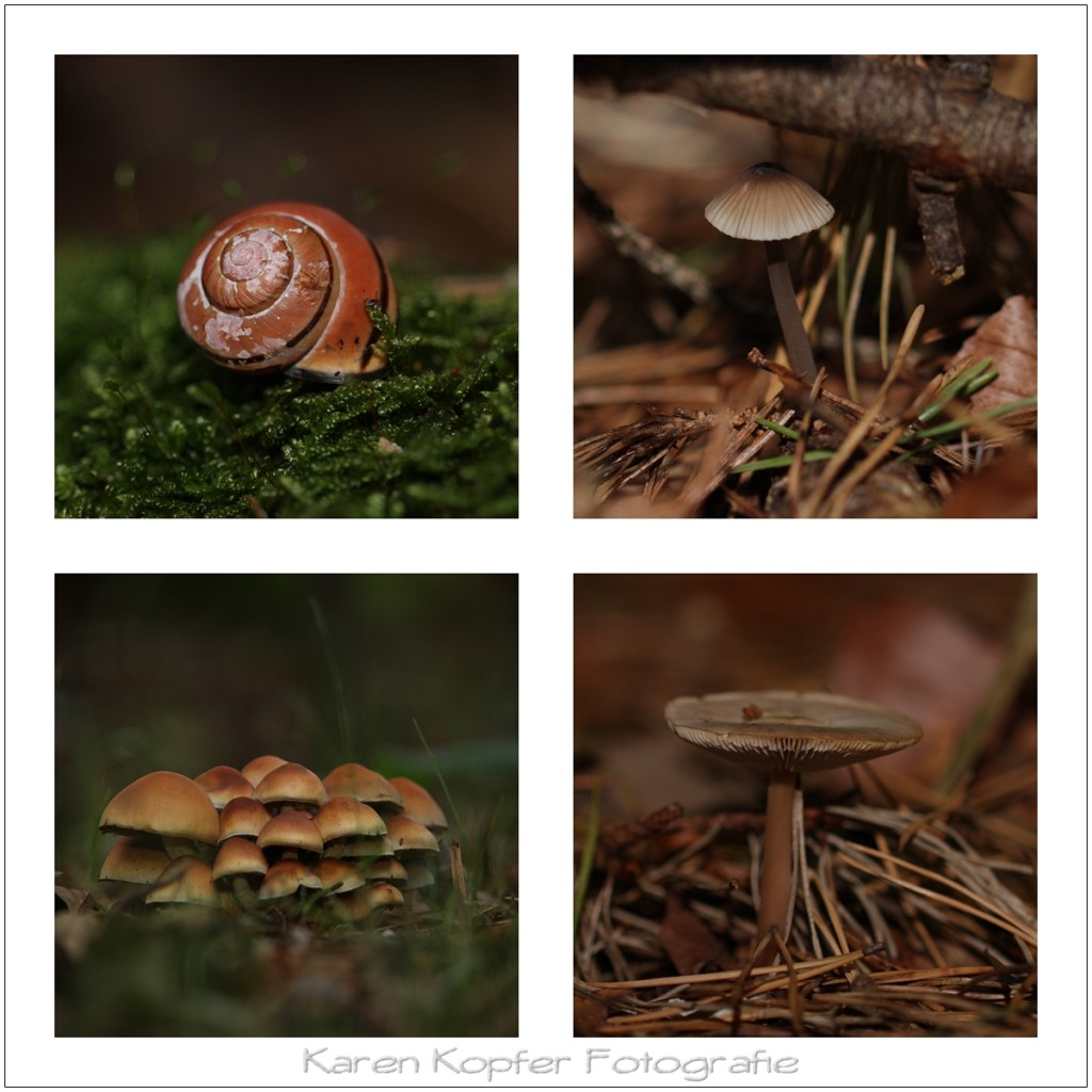 Herbst Pilze Wald