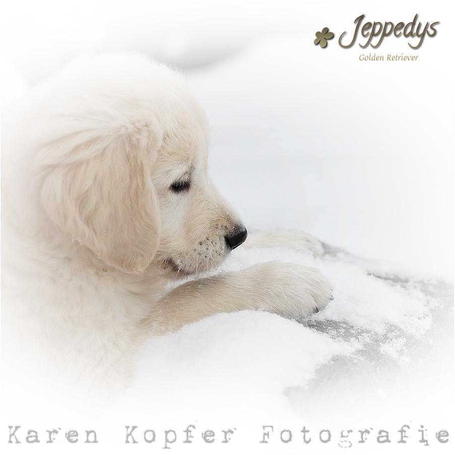 Welpenfoto Hundewelpe im Schnee